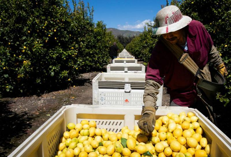 Farm workers have been forced to keep working despite conditions